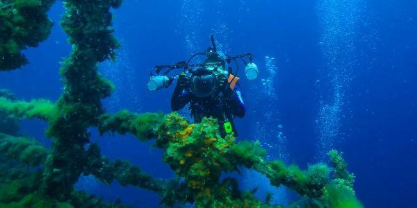 Nos astuces pour débuter et évoluer en photo sous-marine !
