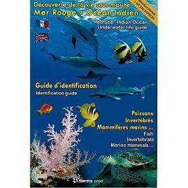 G IDENTIFICATION MER ROUGE OCEAN INDIEN