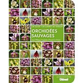 ORCHIDEES SAUVAGES